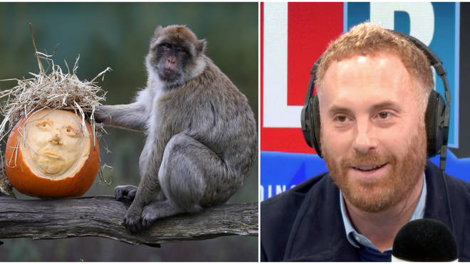 """Labour Caller Complains Tory Constituents Would Vote For """"A Monkey In A Blue Suit"""""""