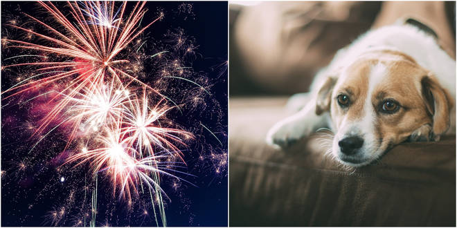 40 per cent of owners claim their pet is scared of fireworks