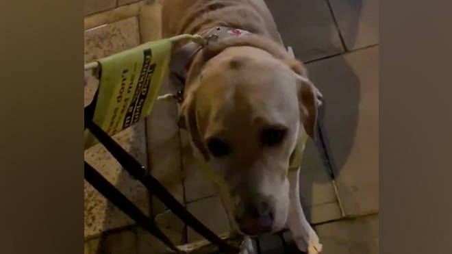 The guide dog was left 'shaking in fear' during the fireworks
