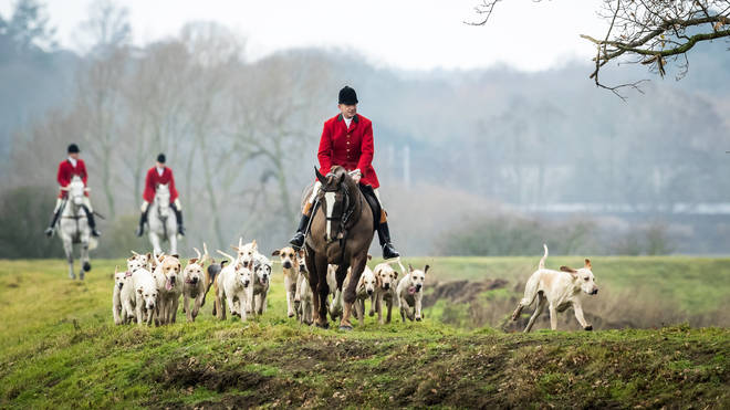 Hunts now take place but dogs are no longer allowed to kill foxes
