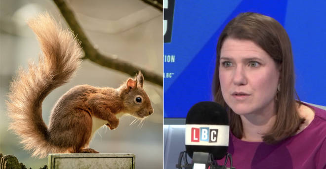 Jo Swinson responded to the viral squirrel story