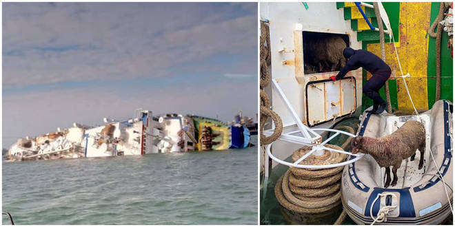 Animal rescuers are trying to recover survivors from an overturned cargo ship
